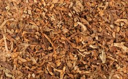 Cut dried leaves of tobacco Royalty Free Stock Image
