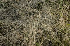 Dry Grass organic hay nature close up stock photography