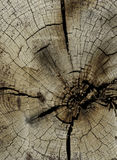 Cut end of wood. With signs of saw marks Royalty Free Stock Image