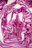 Cut face of red cabbage background Royalty Free Stock Image