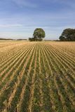 Cut field. Filed alreadi harvested. Nice lines and a tree stock photos