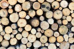 Cut firewood closeup Stock Images