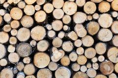 Cut firewood closeup Stock Image