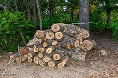 Cut Firewood Stock Photos