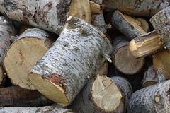 Cut firewood ready to be stacked for winter royalty free stock photography