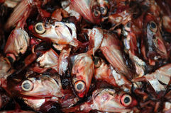 Cut fish heads Stock Images