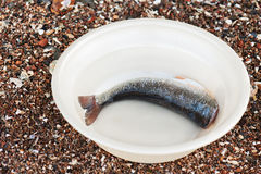 Cut fish rudd in a plastic bowl. Royalty Free Stock Images