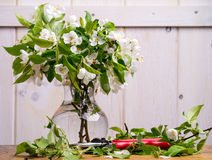 Cut Flower Arranging Royalty Free Stock Photo