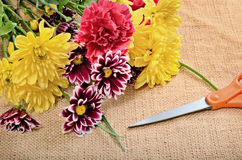 Cut Flowers Royalty Free Stock Images