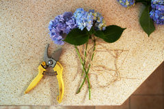 Cut flowers and secateurs are on  table Royalty Free Stock Image
