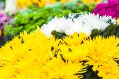 Cut flowers spring background Royalty Free Stock Image