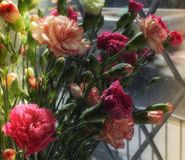 Cut flowers in the window in the sunshine. Close up. stock images