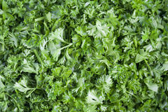 Cut fresh green parsley. Royalty Free Stock Image