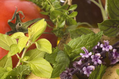 Cut Fresh Herbs And Vegetables Stock Photography