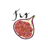 The cut fruit of fig on a white background with the word Fig. Royalty Free Stock Photos