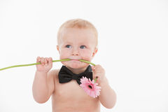 Cut funny baby boy holding flower in his mouth. Stock Image