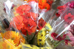 Cut gerberas in plastic packages for sale Stock Photos