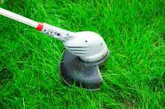 Cut Grass Royalty Free Stock Photo