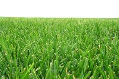 Cut grass Stock Photos