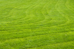 Cut grass. Trimmed the field, nice and neat lawns Stock Images