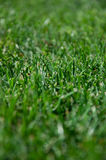 Cut grass Stock Images