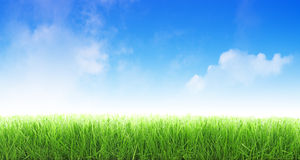 Cut grass royalty free stock photography