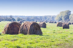 Cut grass in bales in flooded fields by the river Royalty Free Stock Photo