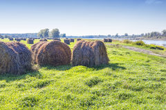 Cut grass in bales in flooded fields by the river Stock Photography