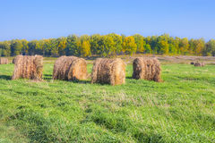Cut grass in bales in flooded fields by the river Royalty Free Stock Images