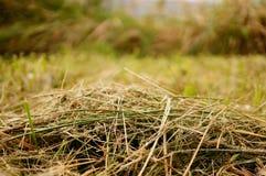 Cut grass Royalty Free Stock Photo