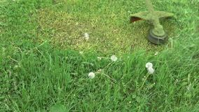 Cut grass with lawn mower trimmer, slow motion. Cut grass in garden with lawn mower trimmer, slow motion stock footage
