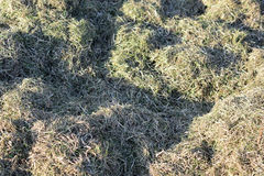 Cut grass on the lawn, unharvested hay. Royalty Free Stock Photos