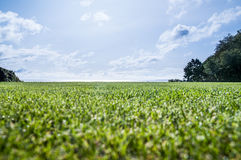 Cut grass near the ocean Royalty Free Stock Image