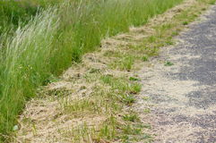 Cut grass Royalty Free Stock Images