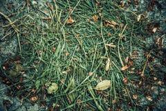 Cut grass texture Royalty Free Stock Photos