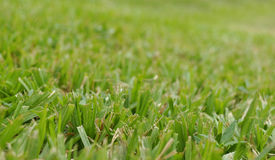 CUT GRASS TEXTURE Royalty Free Stock Images