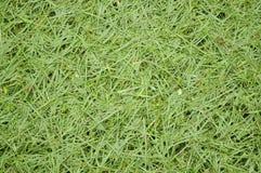 CUT GRASS TEXTURE Stock Image