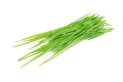 Cut green grass. Royalty Free Stock Photography