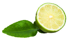 Cut green kaffir lime fruit with leaf isolated Stock Image
