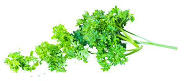Cut green parsley bush. On white background Royalty Free Stock Photography