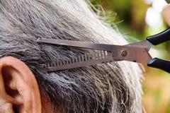 Cut the hair Stock Image