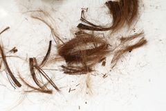 Cut Hair Royalty Free Stock Image