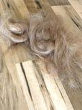 Cut hair on salon floor Stock Image