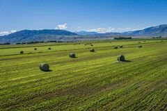 Cut Hay in American Farm Field Royalty Free Stock Photos