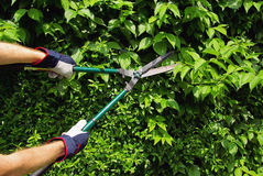 Cut a hedge Royalty Free Stock Photos