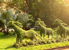 Cut horse bushes in vietnam asian park royalty free stock photography