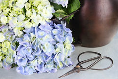 Cut Hydrangea and Gardening Supplies Royalty Free Stock Photography