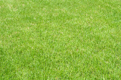 Cut lawn. Field with cut green grass Stock Photography