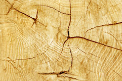 Cut log Royalty Free Stock Images