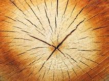Cut log Stock Image